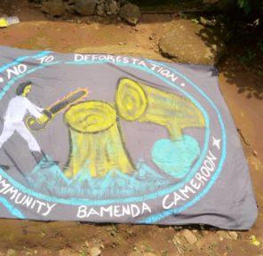Cameroon School (8)